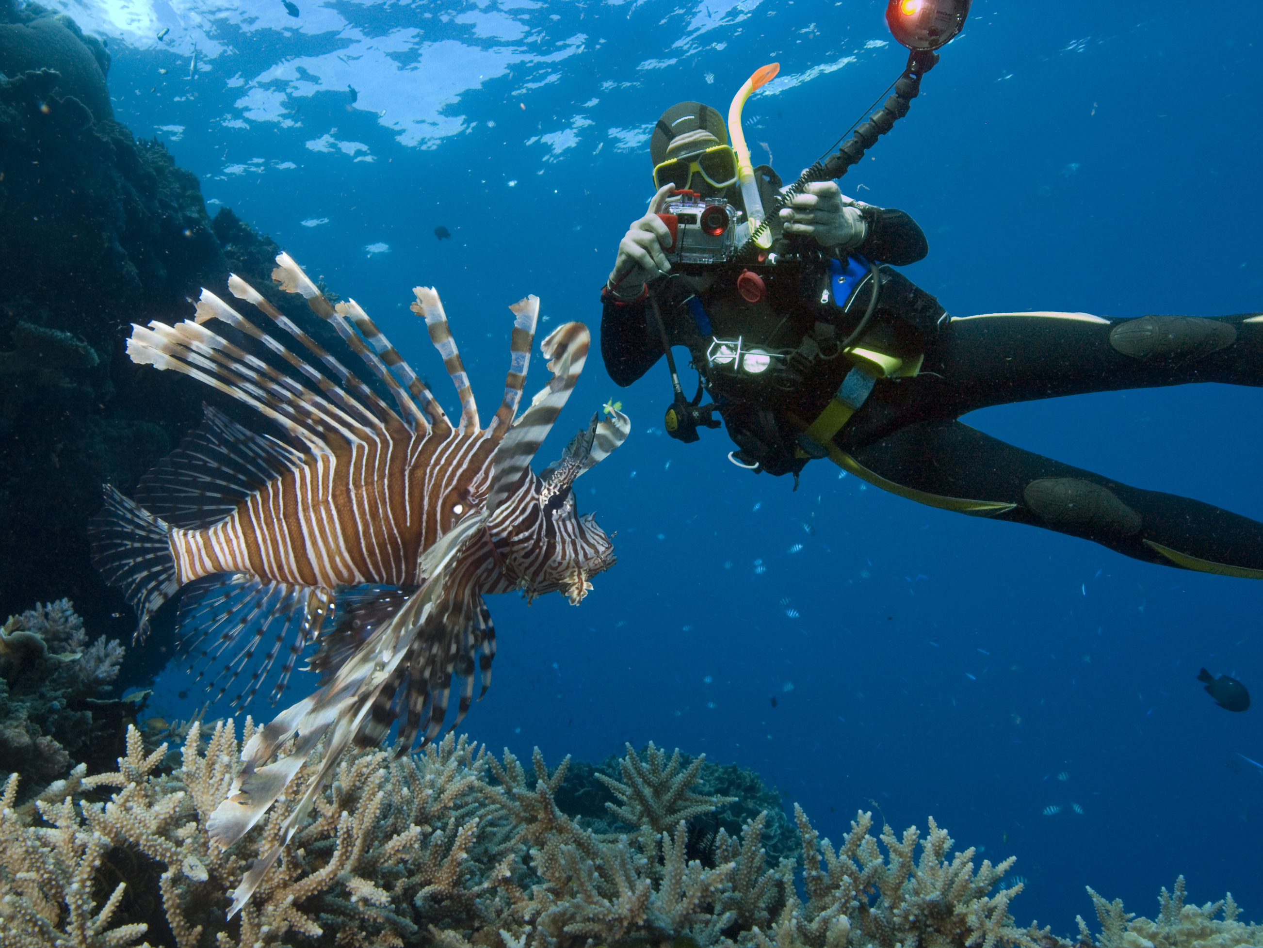 Red Lionfish and Walter Schaerer SCUBA diving on the Great Barrier Reef, Australia