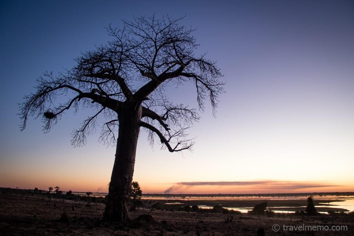 Baobab in der Abenddämmerung in der Nähe der Ngoma Safari Lodge