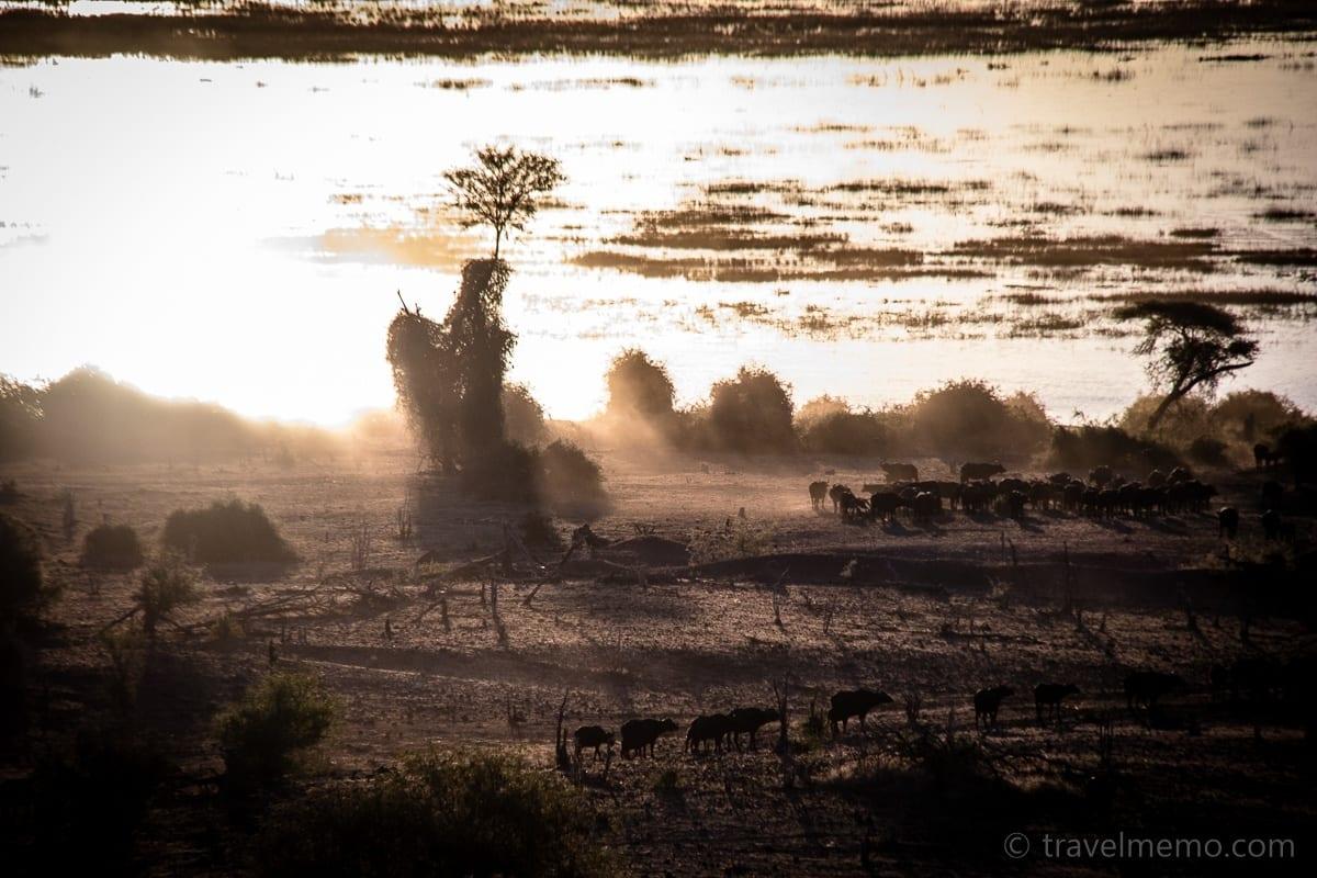 Ans Wasserloch ziehende Büffelherde