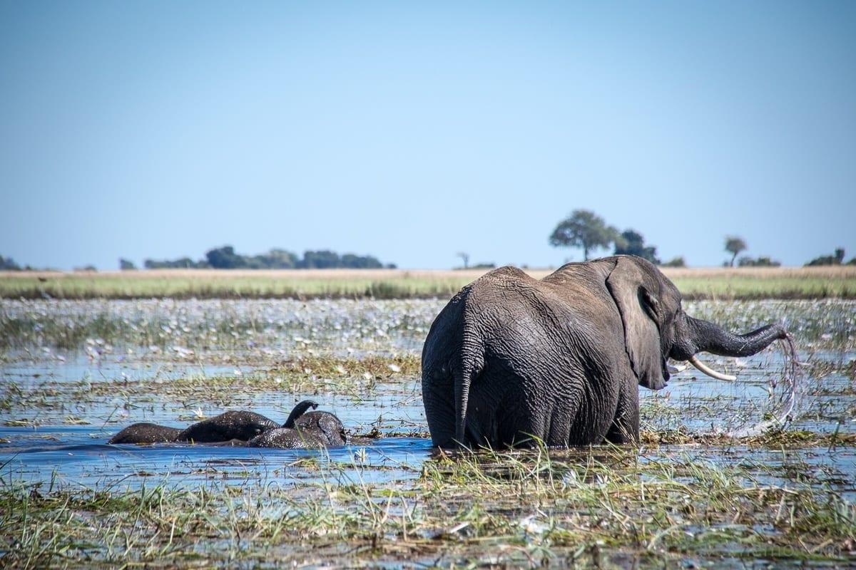 Elephanten im Chobe Nationalpark