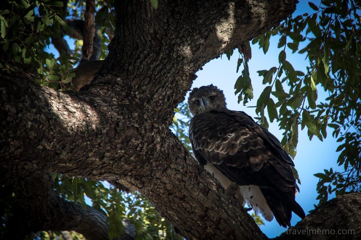 Eule auf dem Baum