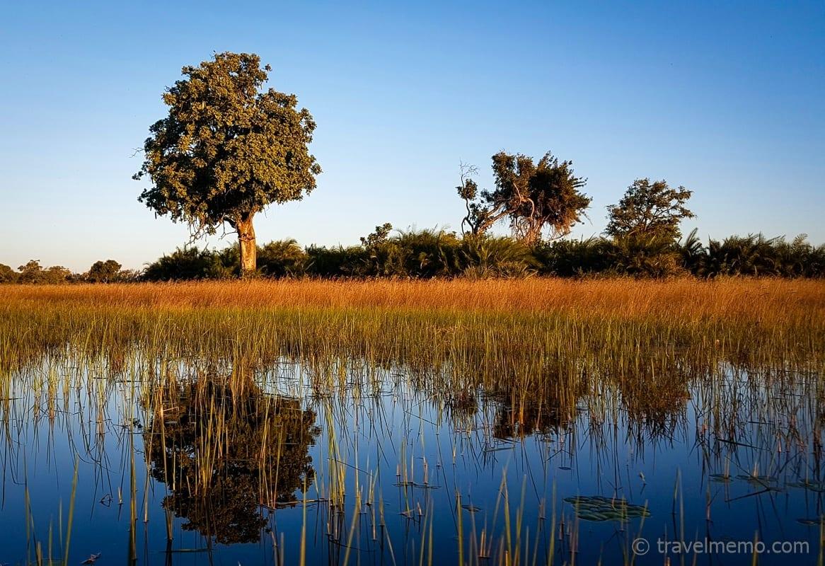 Bäume im Okavango Delta